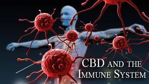 CBD immune system fighting coronavuris